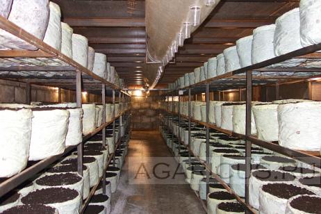 Новые камеры выращивания грибов на нижнем уровне.