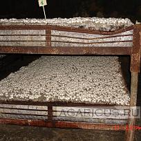 На этих фотографиях покровная почва сделана из торфа и известняка. Соотношение 1 к 1.  При таком раскладе применять торф еще  интереснее, чем что-то изобретать.
