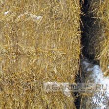 Пшеничная солома прессованная в большие брикеты