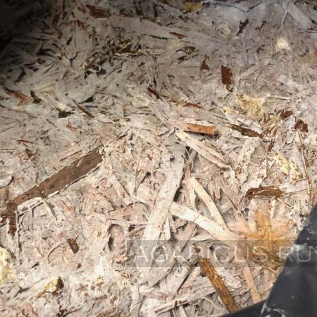 Компост 3 фазы готовый к нанесению покровной почвы
