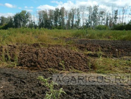 Помёт из птичника складируется за территорией птицефабрики «Россия» на землю